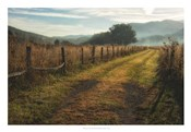 Grassy Lane