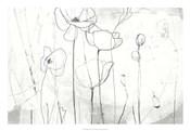 Poppy Sketches I
