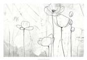 Poppy Sketches II