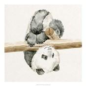 Baby Panda II
