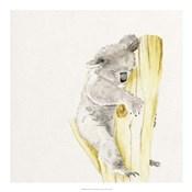 Baby Koala I