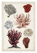 Antique Coral Study I