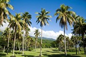Golf course, Taveuni Estates, Fiji