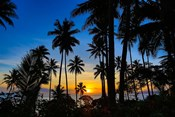 Sunset and Palms, Taveuni, Fiji
