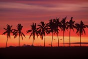 Palm Trees and Sunset, Queens Road, Fiji