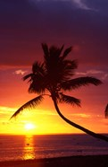 Sunset and Palm Trees, Coral Coast, Viti Levu, Fiji