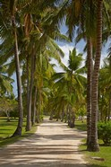 Avenue of Palms, Musket Cove Island Resort, Malolo Lailai Island, Mamanuca Islands, Fiji