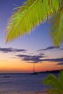 Palm trees and sunset, Plantation Island Resort, Malolo Lailai Island, Mamanuca Islands, Fiji