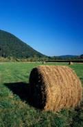 Hay Bales in Litchfield Hills, Connecticut