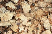 Wood Chips on a TPL Property, Goshen, Connecticut