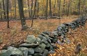 Oak-Hickory Forest in Litchfield Hills, Kent, Connecticut