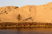 Palm Tree on the Bank of the Nile River, Egypt