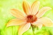 Daisy Sunshine