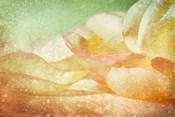Petals Galore