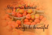Harvest Wish