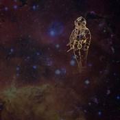Universe Diver