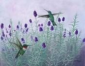 Humming Lavender