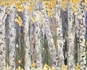Yellow Leaf Birch Trees
