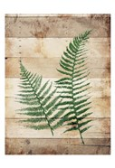Ferns On Wood
