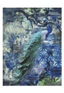 Peacock Jungle Sea