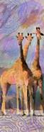 Trio Giraffe