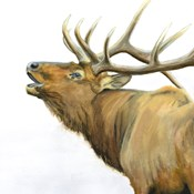 Majestic Elk Brown Crop