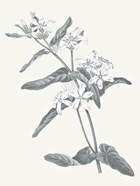 Neutral Botanical IV