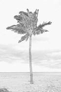 Swaying Palm I