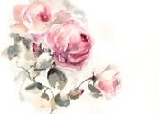 Pink Roses II