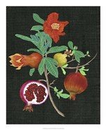 Pomegranate Study II