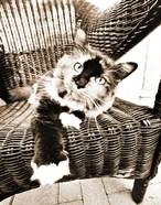 Kitty IV