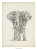 Elephant Sketch II