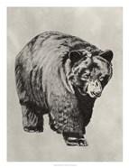 Pen & Ink Bear I