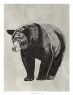 Pen & Ink Bear II