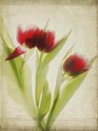 Parchment Flowers I