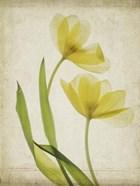 Parchment Flowers IV