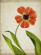 Parchment Flowers V