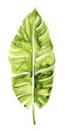 Banana Leaf Study I