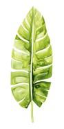 Banana Leaf Study II