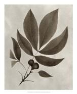 Arbor Specimen V