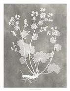 Herbarium Study I
