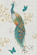 Ornate Peacock IXA