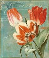Tulips Ablaze II