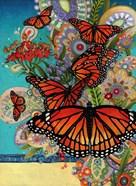Monarch Madness