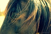 Horse in the Meadow II