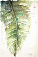 Watercolor Plantain Leaves I