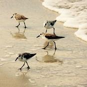 Birds of the Shore Square II
