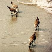 Birds of the Shore Square I