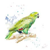 Amazon Parrot III