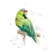 Amazon Parrot II